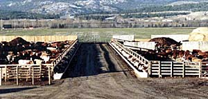 Precast Concrete Cattle Feeders, J bunks, H bunks, BC and